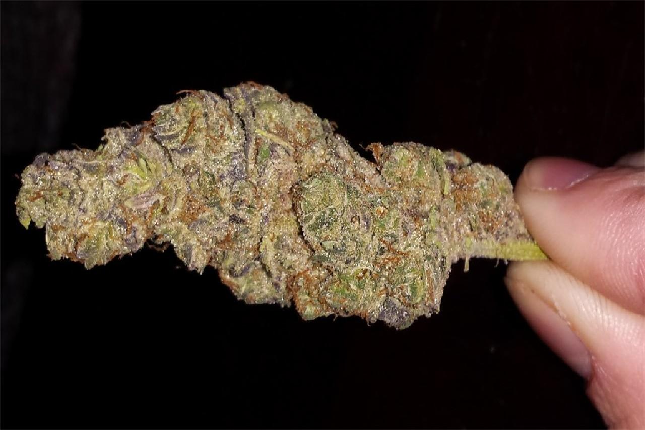 Purple Buddha Weed Strain - image powered by Leafly